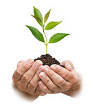 Sapling in hands Royalty Free Stock Images