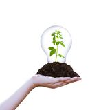 Sapling in lamp on pile on hand Stock Images