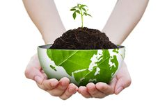 Sapling on pile and butterfly on hand Royalty Free Stock Photos