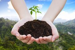 Sapling on pile on hand, View background II Stock Photos