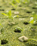 Sapling of plants Stock Image