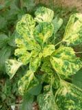 Sapling roślina Zdjęcie Royalty Free