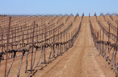 Sapling rows in desert. Rows of saplings planted in Israeli desert Stock Photos