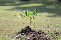 Sapling tree Stock Photo