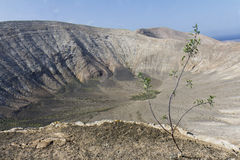 Sapling in a volcanic landscape Royalty Free Stock Images