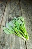 Sapling zielony kale na starym drewnianym tle Zdjęcia Royalty Free