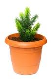 saplings бака глины зеленые растущие Стоковое Изображение RF