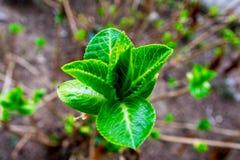 saplings Стоковое Фото