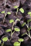 Saplings Stock Photo