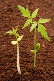 saplings 2 жизни новые стоковая фотография