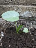 saplings Стоковое фото RF