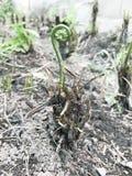 saplings Стоковые Изображения RF