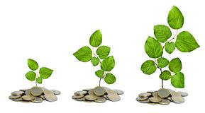 Saplings growing from coins royalty free stock images