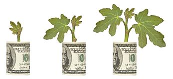 Saplings growing from dollar bill royalty free stock images
