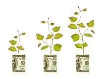 Saplings growing from dollar bill. Progress: saplings growing from dollar bill royalty free stock images
