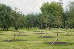 Saplings in a park Stock Photography