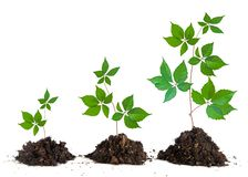 Saplings on white background stock images