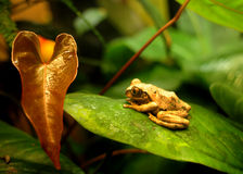 Sapo - Frog. Nature balance - life, water and leafs in soft balance Royalty Free Stock Photos