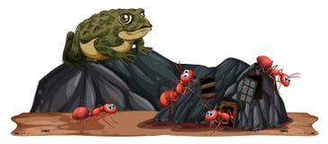 Sapo que mira hormigas libre illustration