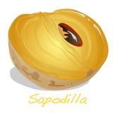 Sapodilla διάνυσμα φρούτων Στοκ φωτογραφία με δικαίωμα ελεύθερης χρήσης