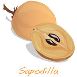 Sapodilla διάνυσμα φρούτων Στοκ εικόνα με δικαίωμα ελεύθερης χρήσης