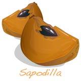Sapodilla διάνυσμα φρούτων Στοκ Εικόνα