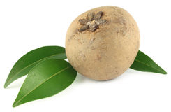 Sapodilla fruits Stock Photos