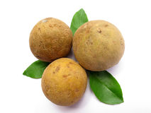 Sapodilla-Fruta imagem de stock