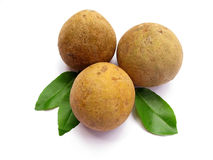 Sapodilla-Isolated Royalty Free Stock Photo