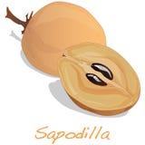 Sapodilla owoc wektor royalty ilustracja