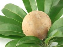 Sapodilla or sapota fruits with green leaves Royalty Free Stock Photos