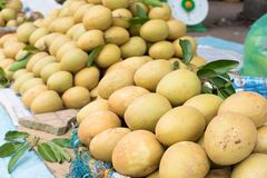 Sapodilla, tropisch die fruit bij Lange het fruitmarkt van Vinh wordt getoond, Mekong delta De meerderheid van de vruchten van Vi stock afbeelding