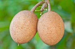 Sapota Frucht Lizenzfreie Stockfotos