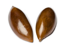 Sapote or Mamey Seeds Stock Photo