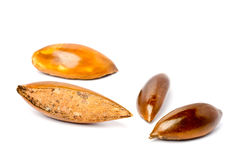 Sapote or Mamey Seeds Stock Photography