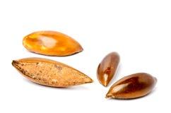 Sapote ou graines de Mamey Photographie stock