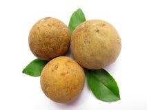 Sapotillbaum-Frucht stockbild