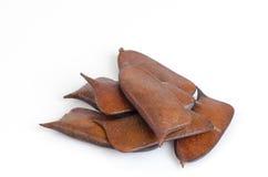 Sappan seeds. (Caesalpinia sappan Linn.) Stock Image