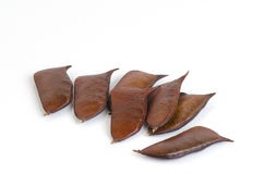 Sappan seeds. (Caesalpinia sappan Linn.) Stock Images