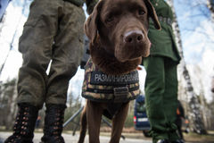 Sappers dei guerrieri con i cani di servizio immagine stock libera da diritti