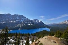 Sapphire Blue Colored Peyto Lake Banff royaltyfria bilder