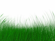 Sappig groen gras Royalty-vrije Stock Foto