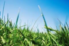 Sappig groen gras op blauwe hemelachtergrond Verbazend landschap Royalty-vrije Stock Afbeelding