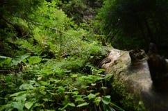 Sappig, weelderig bergvegetatie, Varen en mos op mosboom royalty-vrije stock fotografie