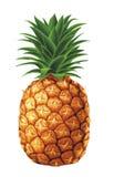 Sappige ananas Royalty-vrije Stock Afbeelding