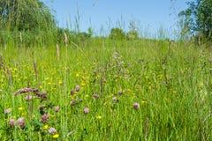 Sappige bloemweide in de zomer Royalty-vrije Stock Foto's