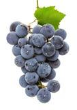 Sappige druiven die op de witte achtergrond worden geïsoleerd Stock Foto