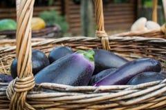 Sappige en rijpe seizoengebonden groenten De blauwe en purpere aubergines in een rieten mand maakten van wijnstok, na het oogsten stock foto