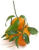 Sappige (geïsoleerde) mandarijnen Stock Fotografie