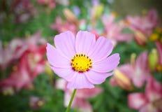 Sappige kleuren van de zomer royalty-vrije stock afbeelding